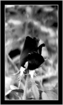 siyah.jpg